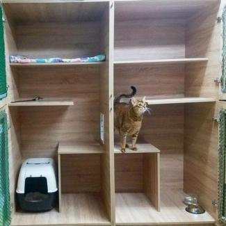 """Вольер для кошек люкс зоогостиницы """"Питомцы В Радости"""""""