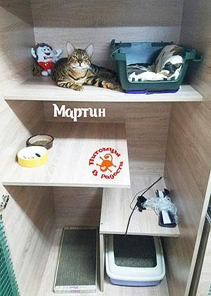 Гостиница для кошек в Санкт-Петербурге