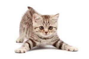 Кошка в доме. Что необходимо для счастливой жизни вашего питомца?