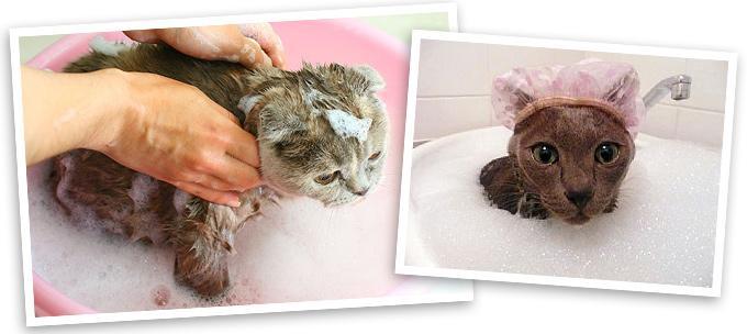 как мыть кошку или кота