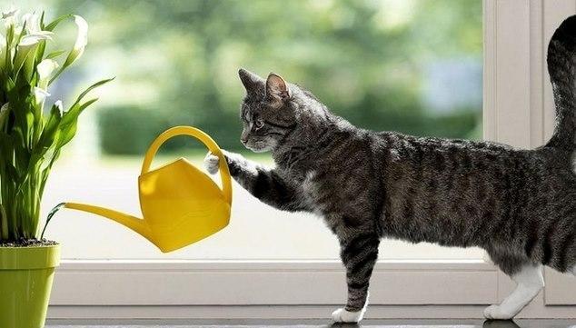 оставить кошку на время отпуска
