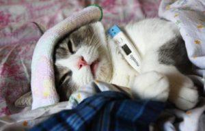 Кошка приболела