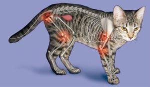 артроз у кошек как лечить