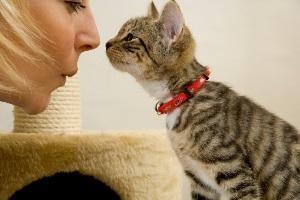 10 признаков того, что кошка любит вас