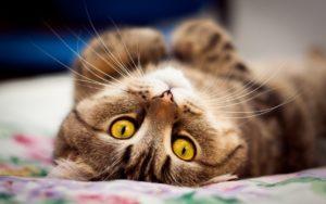 Может ли кошка гадить во время течки?