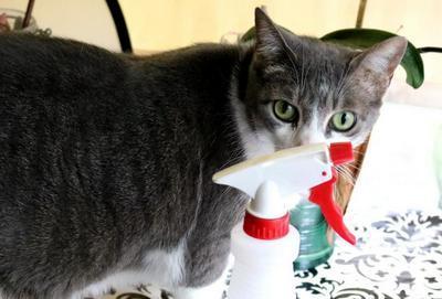 Кошка метит территорию