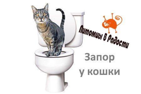 лечение запора у кошек в домашних условиях