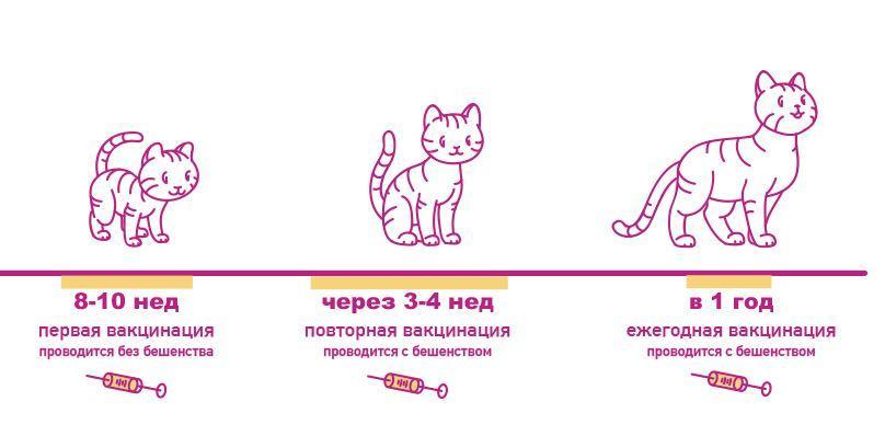 Вакцинация котят