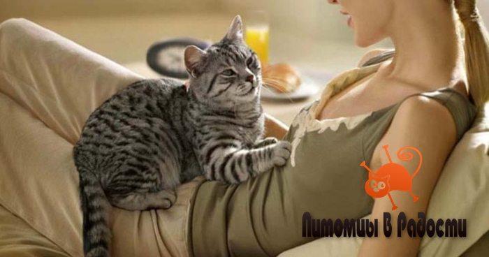 Почему кошка топчет лапками