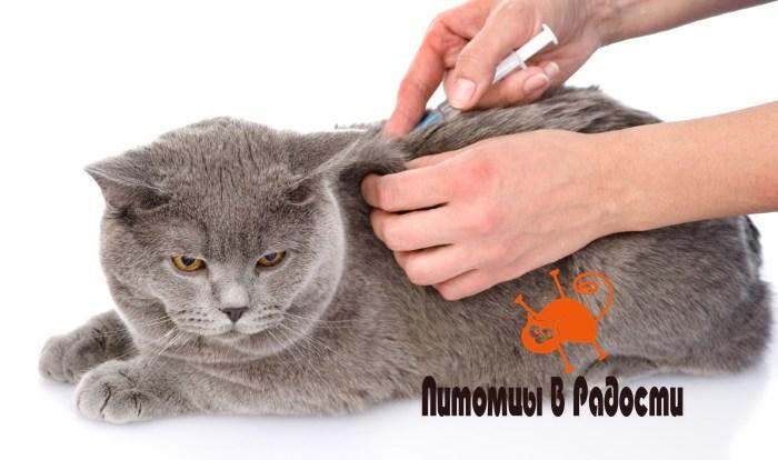 Стерилизация кошек уколом