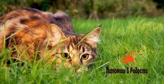 Кормите кошку, как охотника!