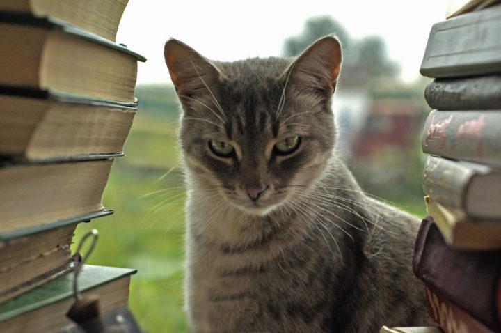 10 занимательных фактов о мозге, поведении и интеллектуальных способностях домашней кошки