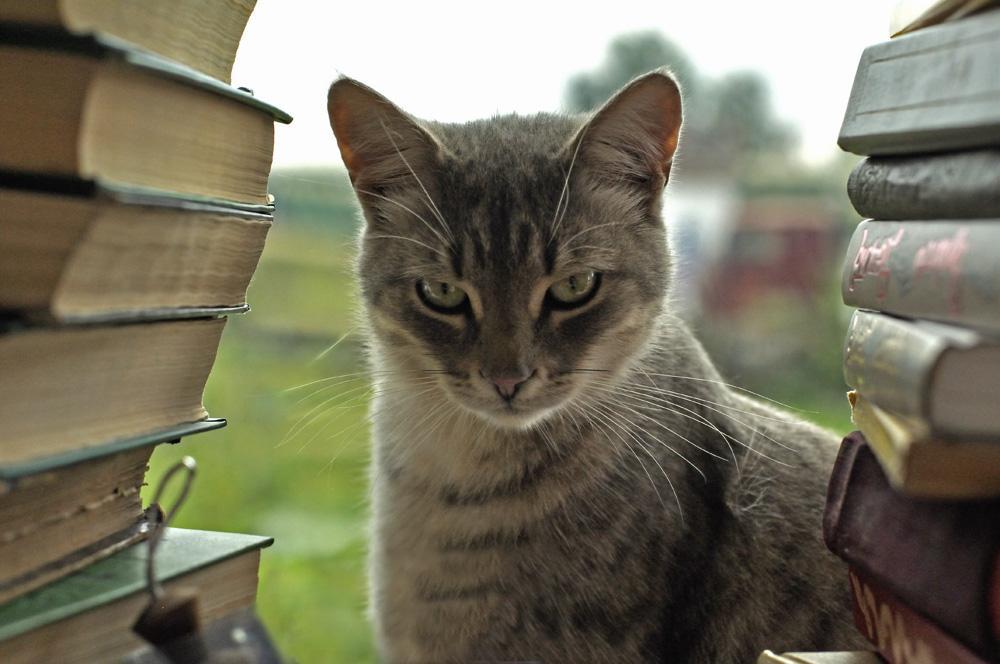 10 занимательных фактов о мозге, поведении и интеллектуальных способностях домашней кошки.