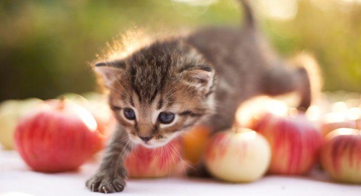 Какие фрукты могут есть кошки?
