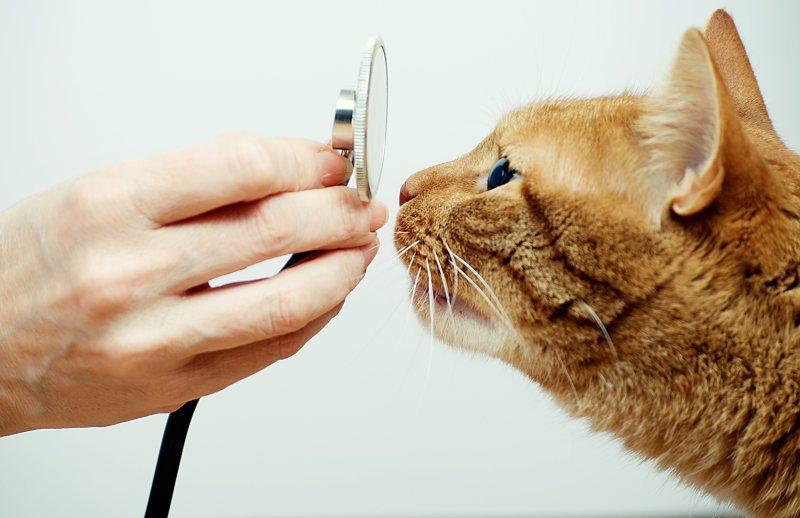Важность профилактического осмотра кошки