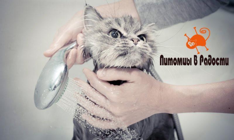 Правила купания кошек, собак и других домашних животных