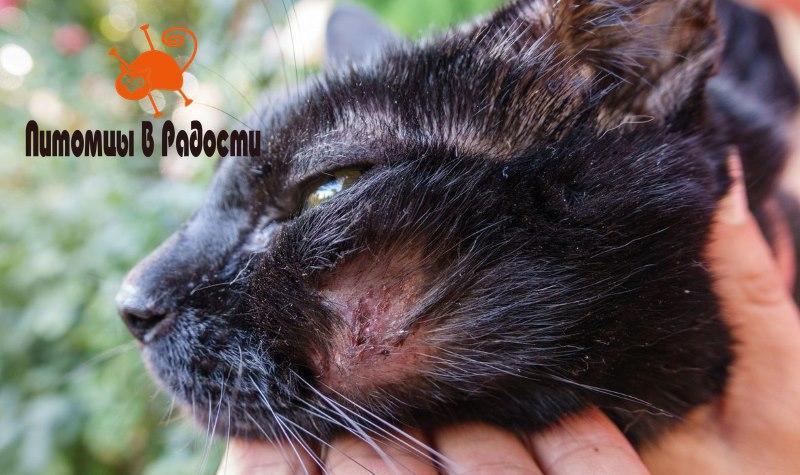 Проблемы с кожей у кошек