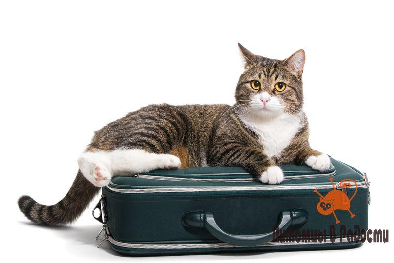 переезд с кошкой