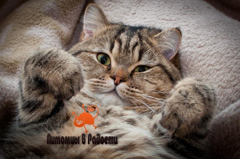 ТОП 30: интересных фактов о кошках