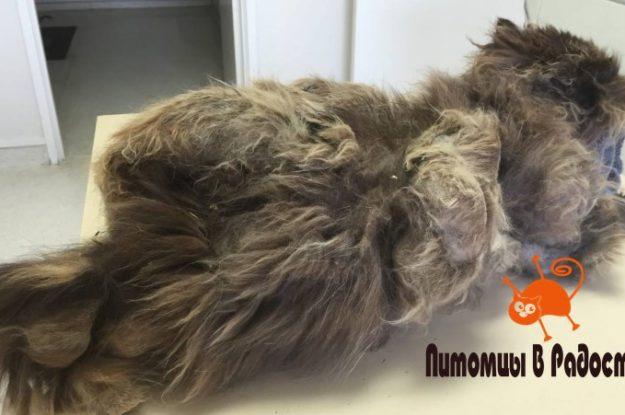 Как решить проблему с комочками шерсти у кошки