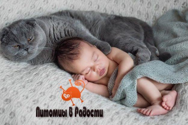 Стоит ли держать кошку в семье с новорожденным?