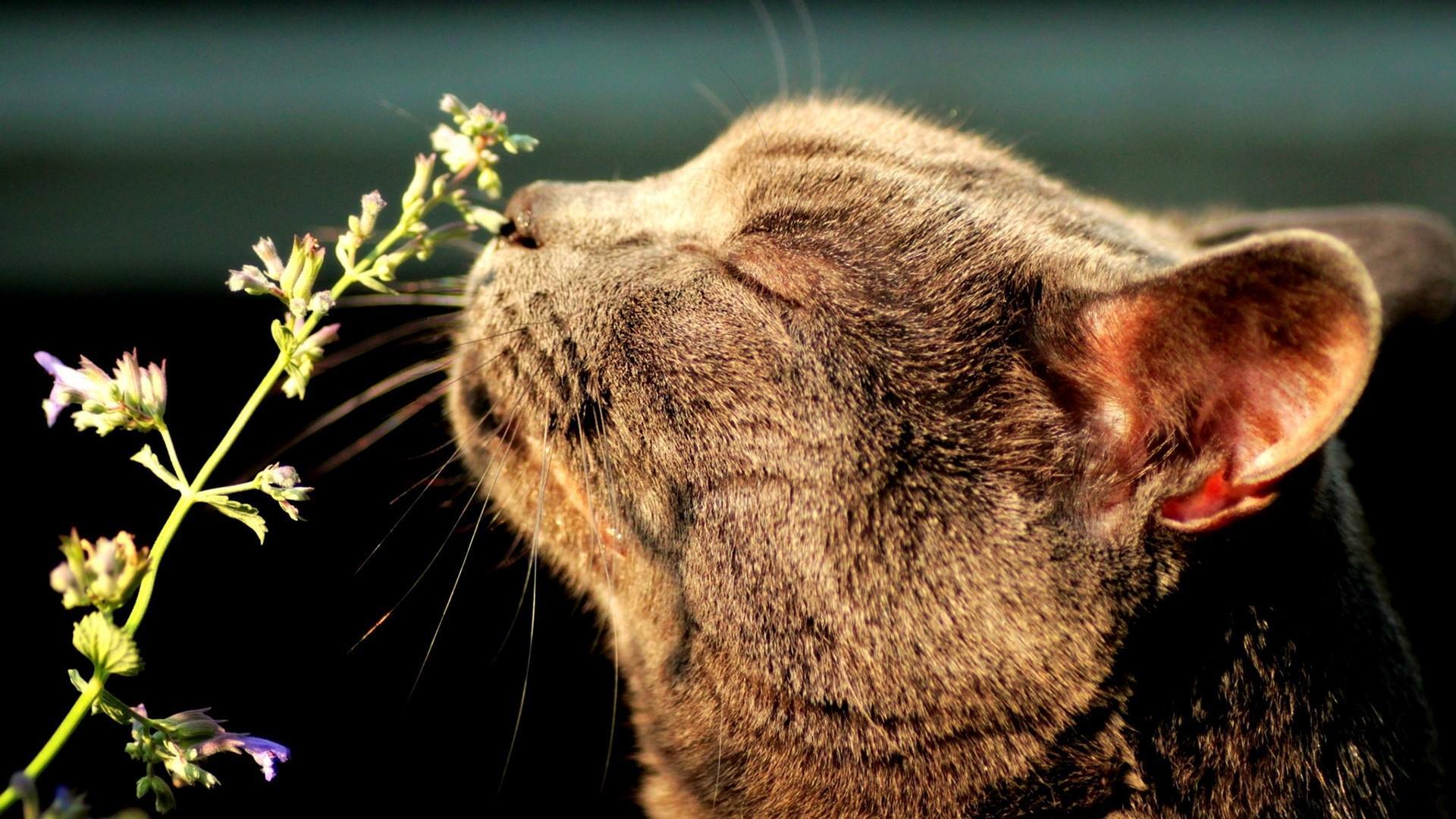 Коши и обоняние