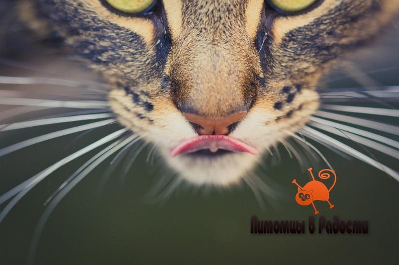 Кошачьи вибриссы