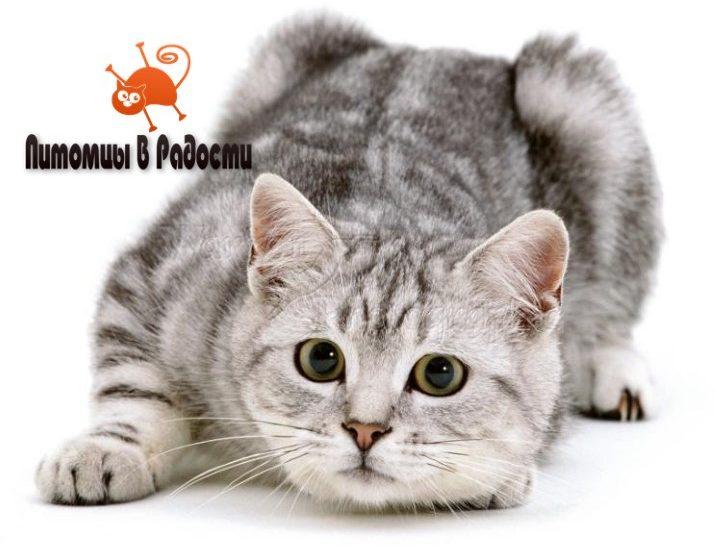 Кошка и слух