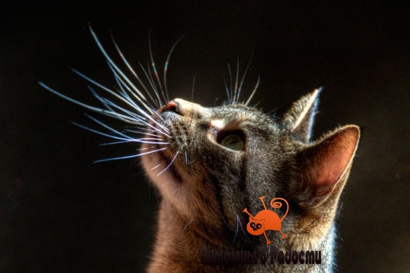 Усы кошек
