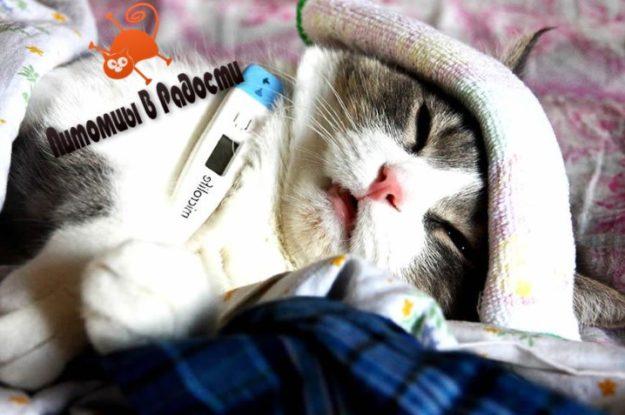Грипп у кошек: признаки и возможное лечение