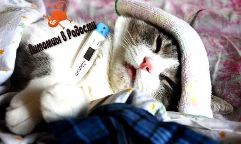 Грипп у кошек
