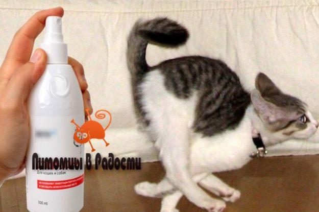 Виды отпугивателей кошек