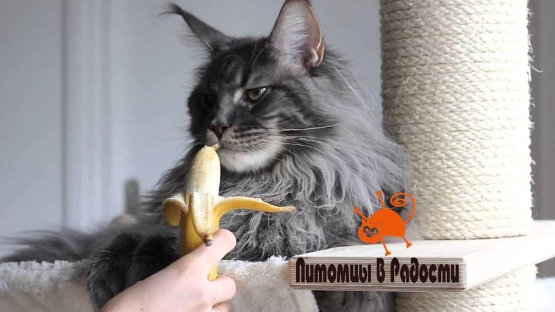 Можно ли кошкам есть бананы?