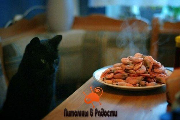 Можно ли кошкам есть креветки?