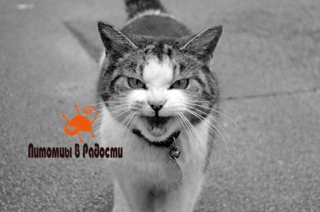 Характер кошек — свойства и особенности