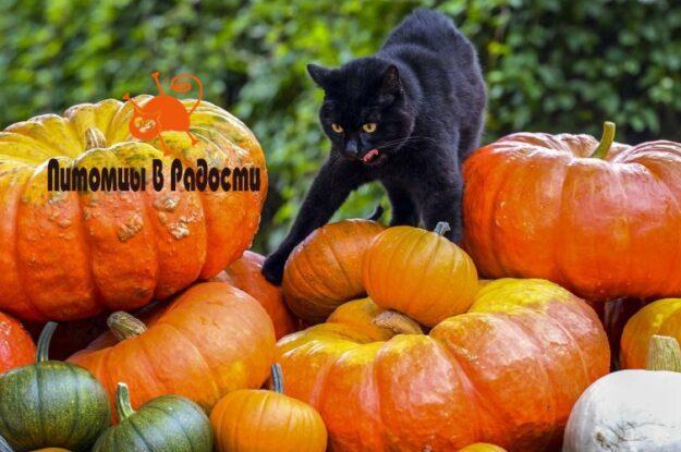 Можно ли кошкам есть тыкву?