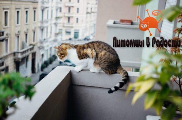 Кошка упала с балкона. Что делать?