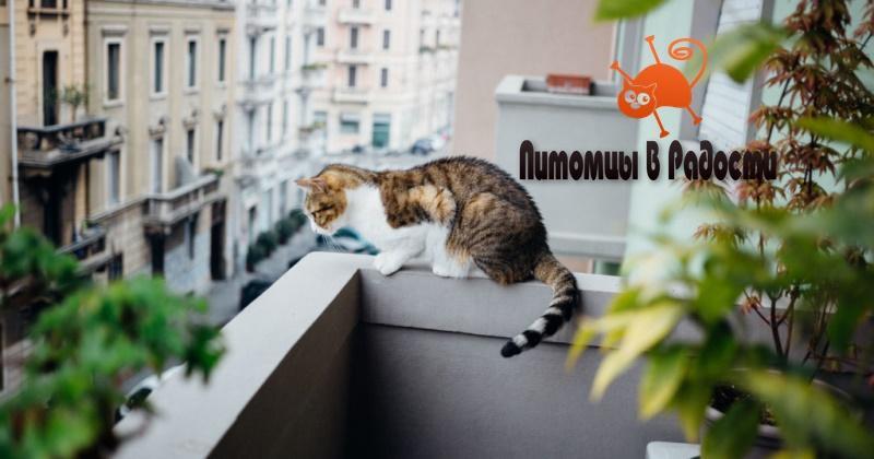 Кошка упала с балкона - что делать