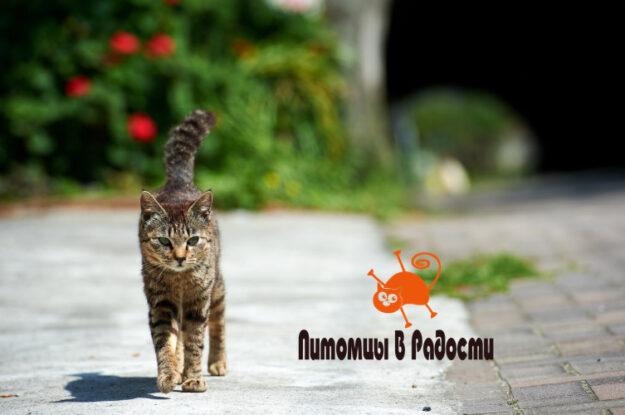 Способы безопасного содержания кошки на улице