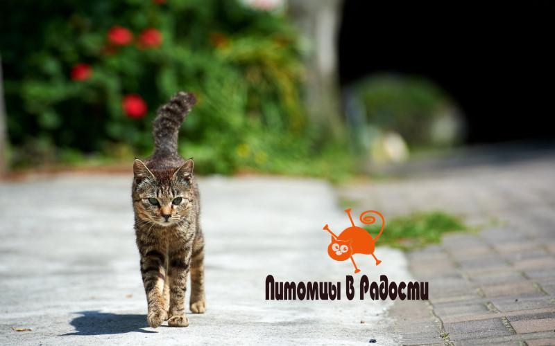 безопасное содержание кошки на улице