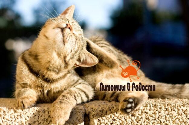 Блохи у кошки: чем опасны и как навсегда распрощаться с паразитами?