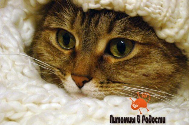 Кошки зимой: 7 советов для здоровья, тепла и уюта