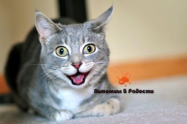Как продлить жизнь кошки – 5 рекомендаций для владельцев
