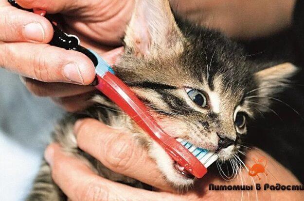 Стоматологическая помощь: насколько важна гигиена полости рта вашей кошки?