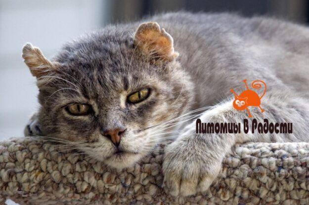 Уход за стареющей кошкой – оптимизация условий и питания, ветеринарная помощь