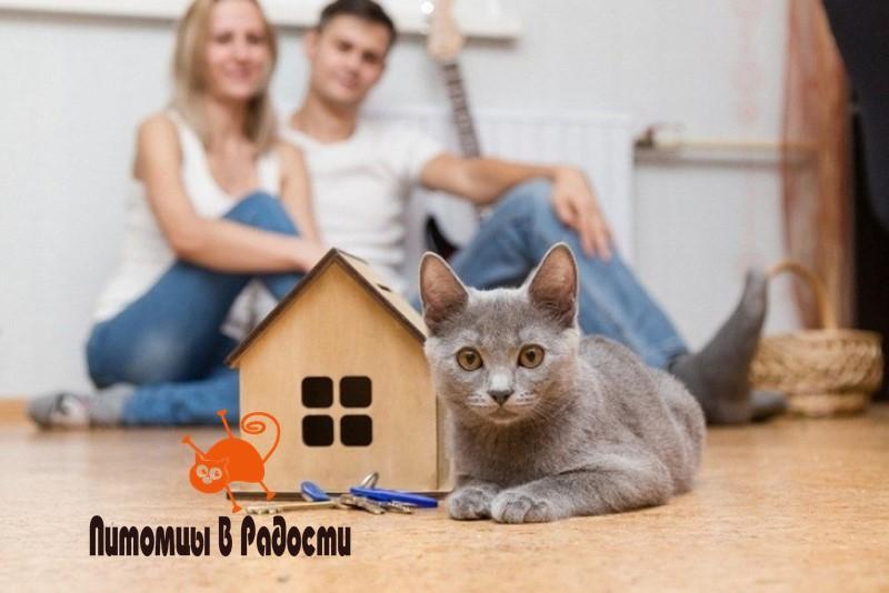 Переезд с кошкой - особенности
