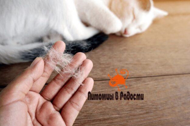 Почему у кошки выпадает шерсть и как это устранить