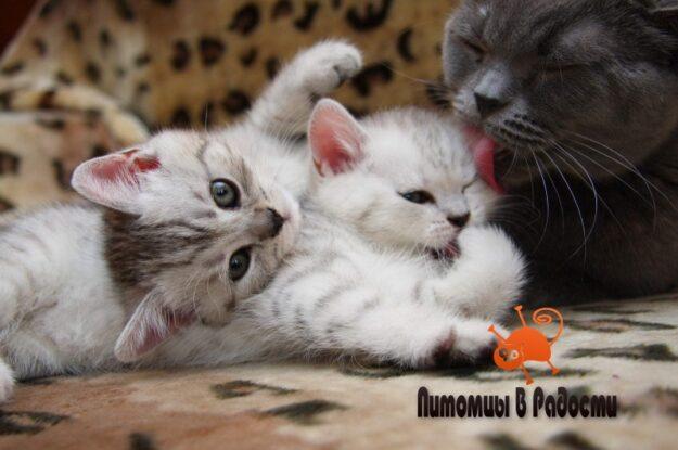 В каком возрасте можно забирать котенка от кошки в новый дом?