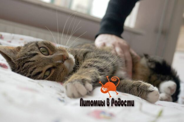 Отравление у кошки – причины и симптомы, что делать при отравлении?