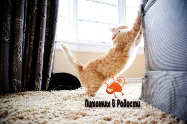 Кошки против диванов: как отучить кошку царапать мебель